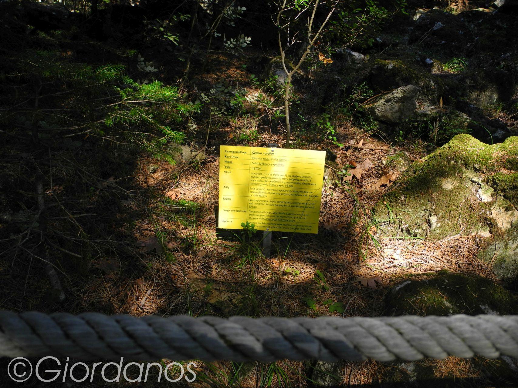 Waldlehrpfad Drimonas-Wasserfälle Drimonas Evia Griechenland
