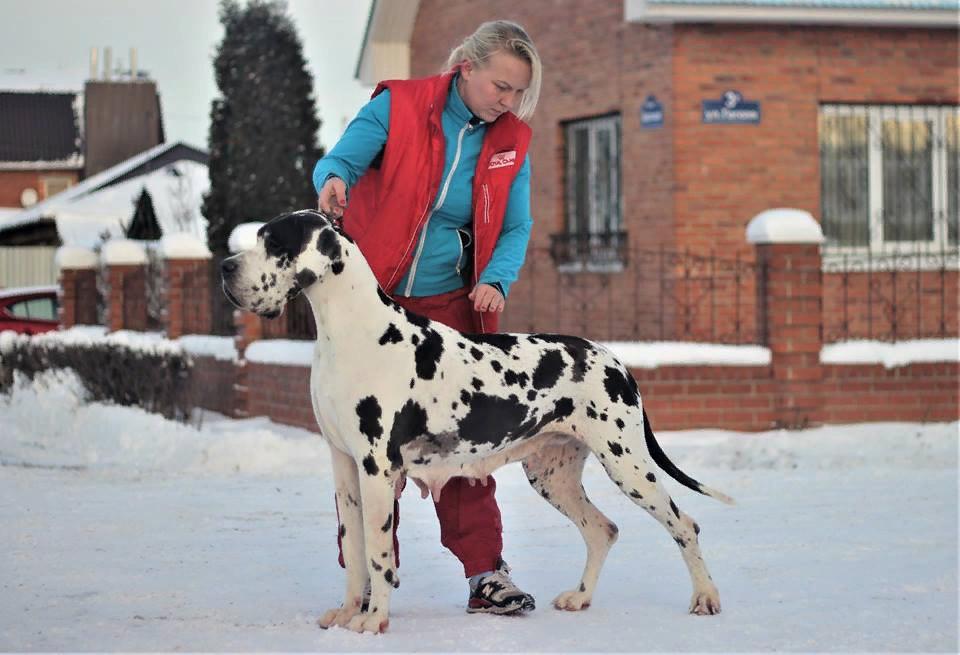 Bigfort Iskra Oldbluz owner Oldbluz kennel