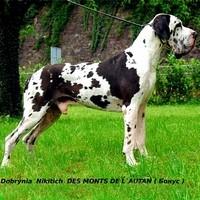 Dobrynia Nikitich des Monts de L`Autan