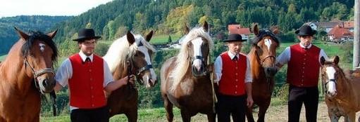 Schwarzwälder Kaltblut - Stuten auf dem Weg zum Landwirtschaftlichen Hauptfest in Stuttgart