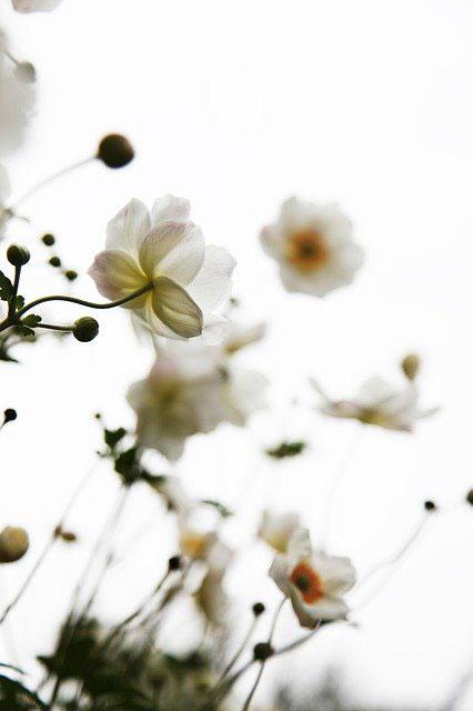 写真:白い花