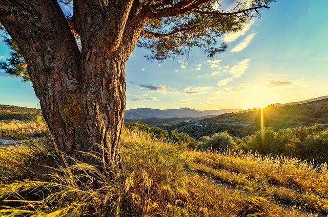 写真:木と空と夕陽