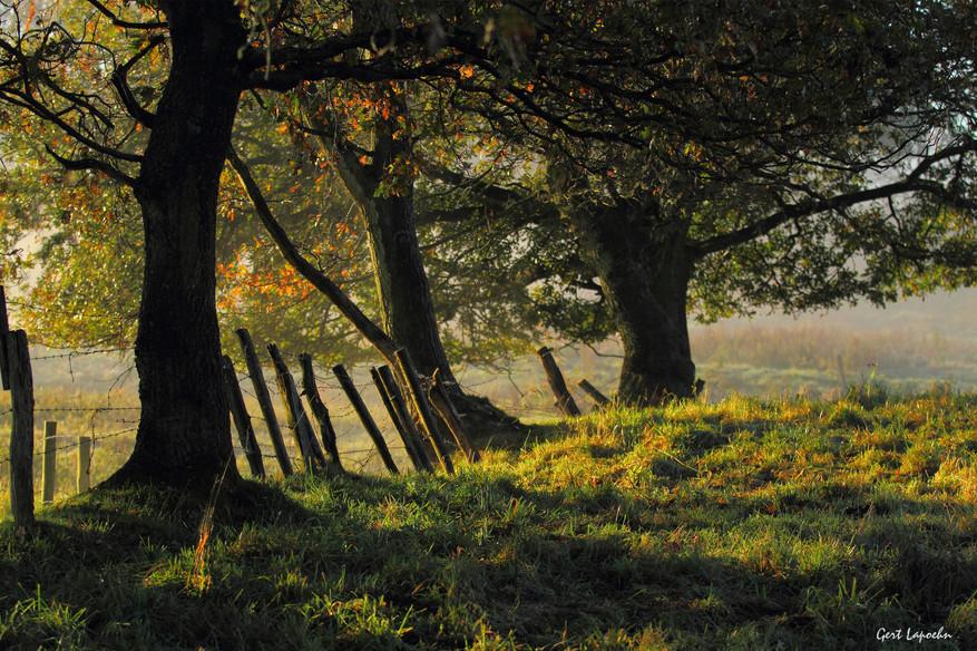 Landschaftsfoto in aller Frühe.