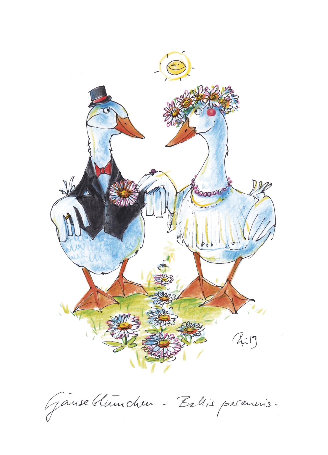 Zur Hochzeit - Das Gänseblümchen