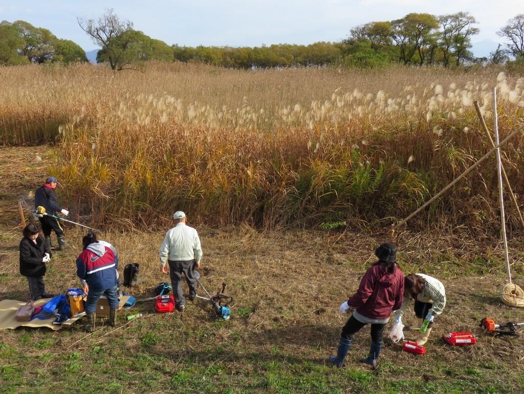 葦刈り開始