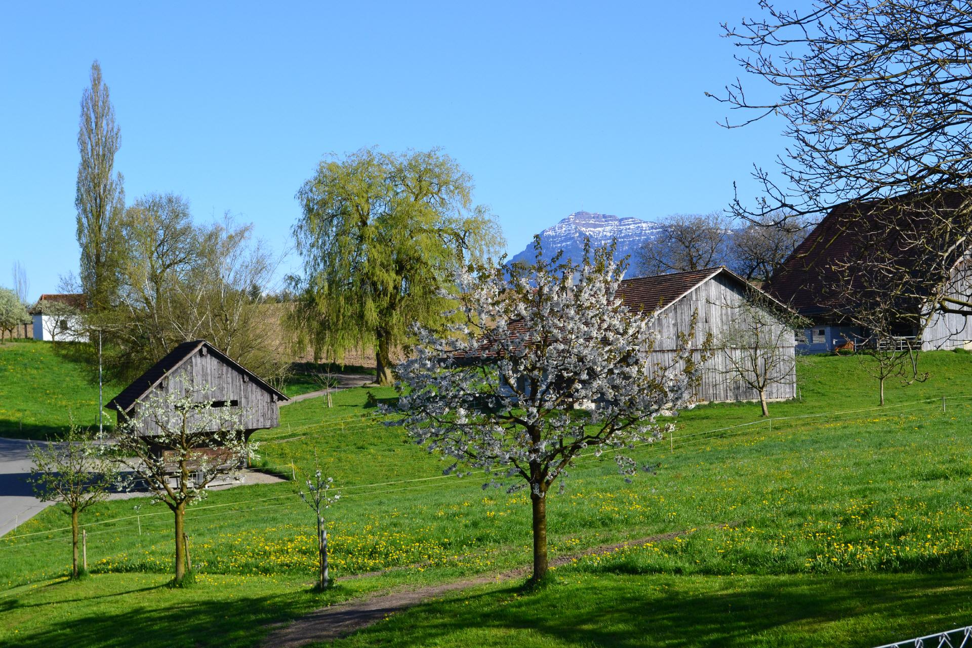 Frühlingsfoto Richtung Rigi