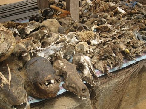 Le vaudou à Lomé au Togo
