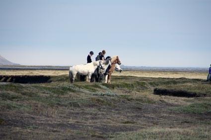 Reiten auf Islandpferden (IS)