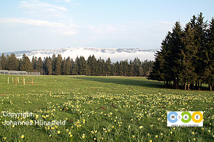 Frühlingswanderung am Mont de Soleil - Blick auf den Chasseral