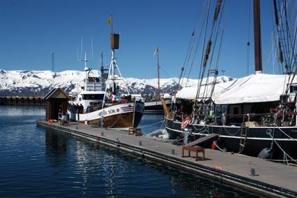 Die Walbeobachtungsboote von North Sailing (IS)