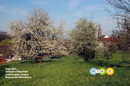 Frühling in Sasbachwalden