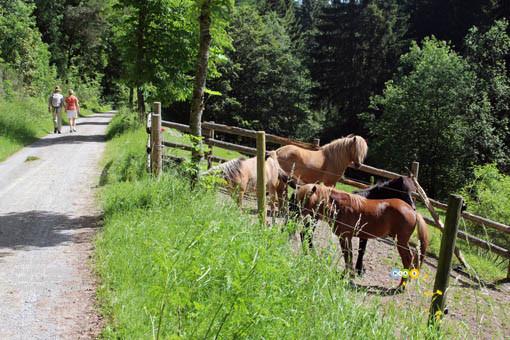 Wandern in Pfalzgrafenweiler