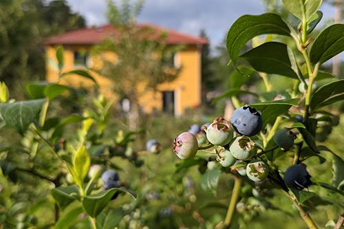 Gartenfrüchte und Sämereien