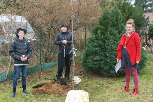 28.11.2020 Pflanzaktion in Borkheide mit einer Kirsche [Archivbild]