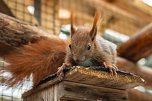 Hörnchengewimmel im Tipidorf