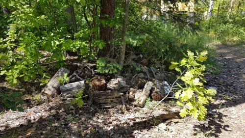 ein liegen gelassener Holzhaufen