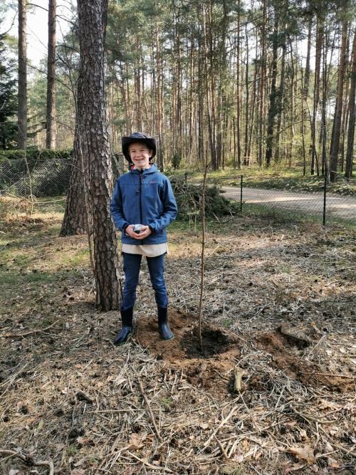 08.04.2020 Jonas pflanzt im  Tipidorf Borkwalde den Baum des Jahres 2020, die Robinie [Archivbild]