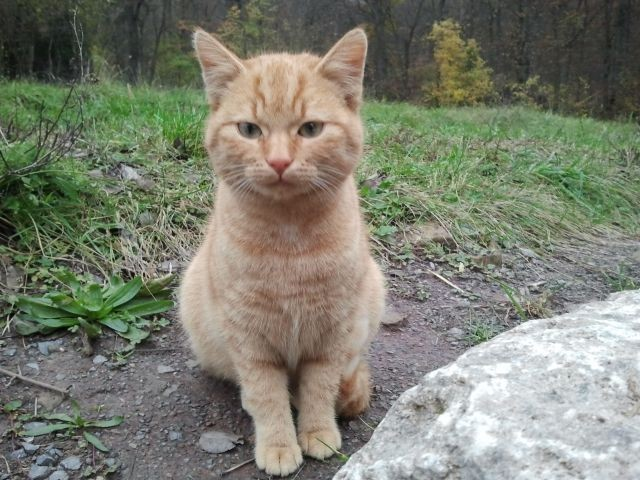 Garfield ( auch Schnurri genannt)