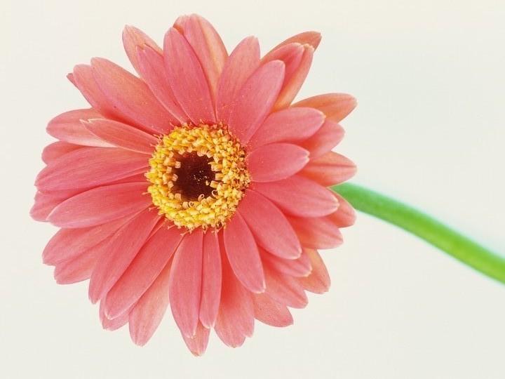 きれいな花のように・・・