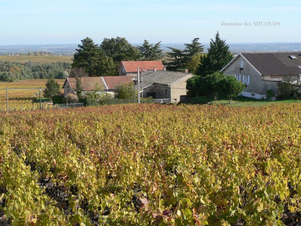 Les batiments d'exploitation nichés au milieu des vignes