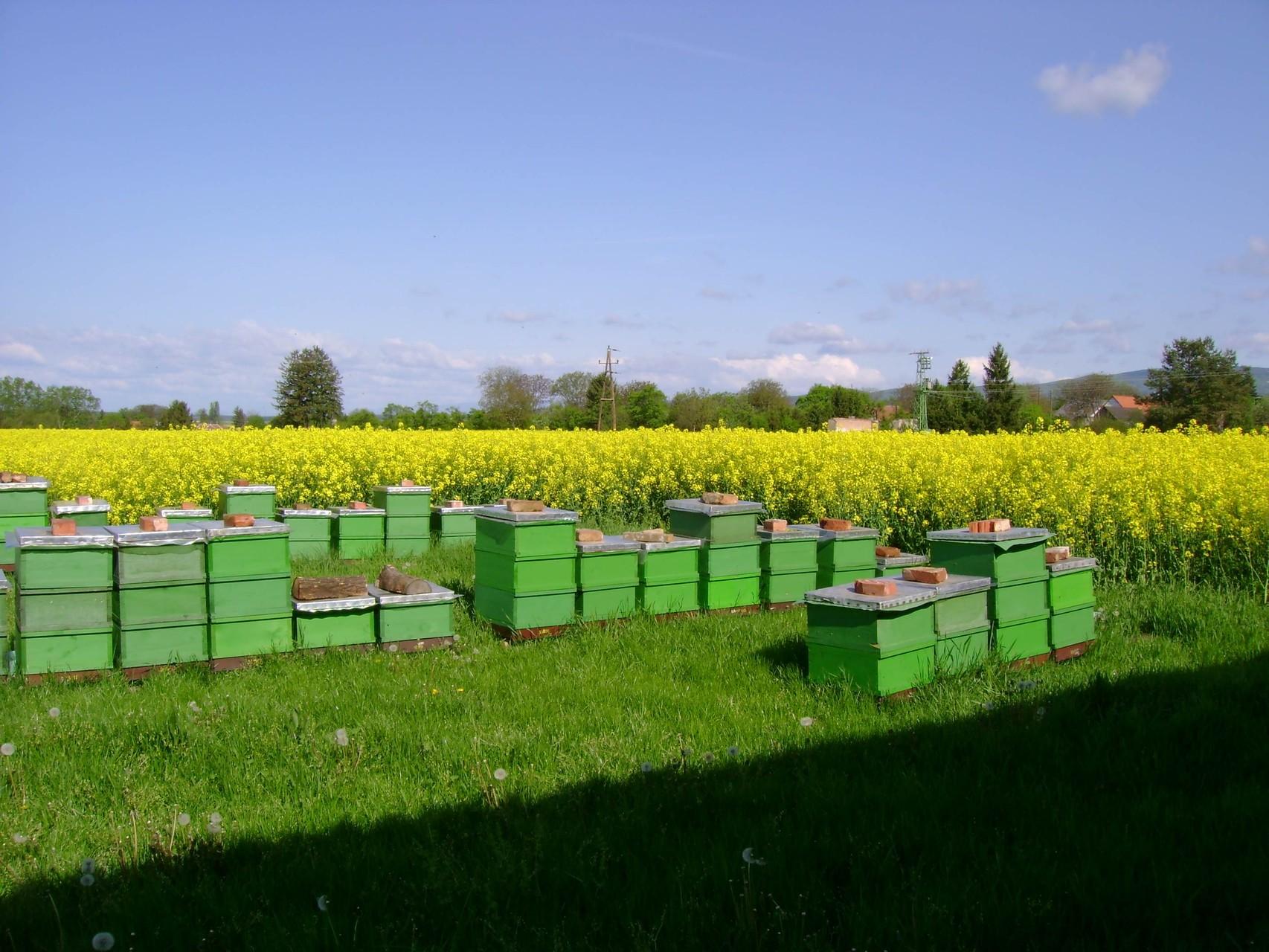 Bienenstöcke im Burgenland