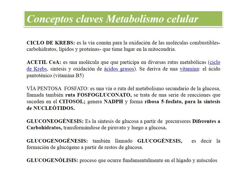 La filosofía de Metabolismo basale