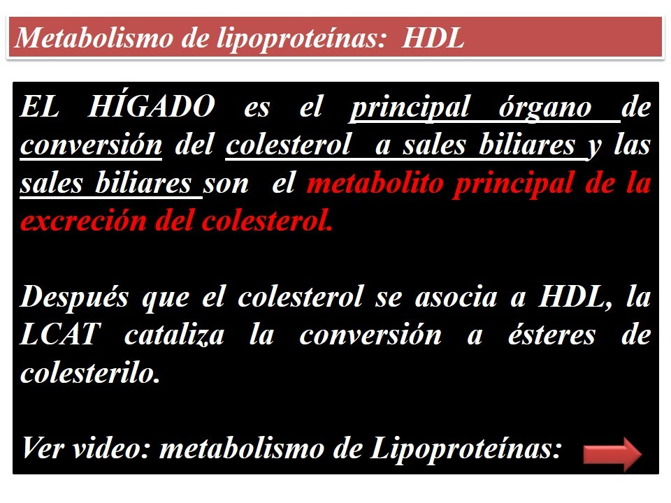 Diapositivas Metabolismo de Lípidos - Página web de..