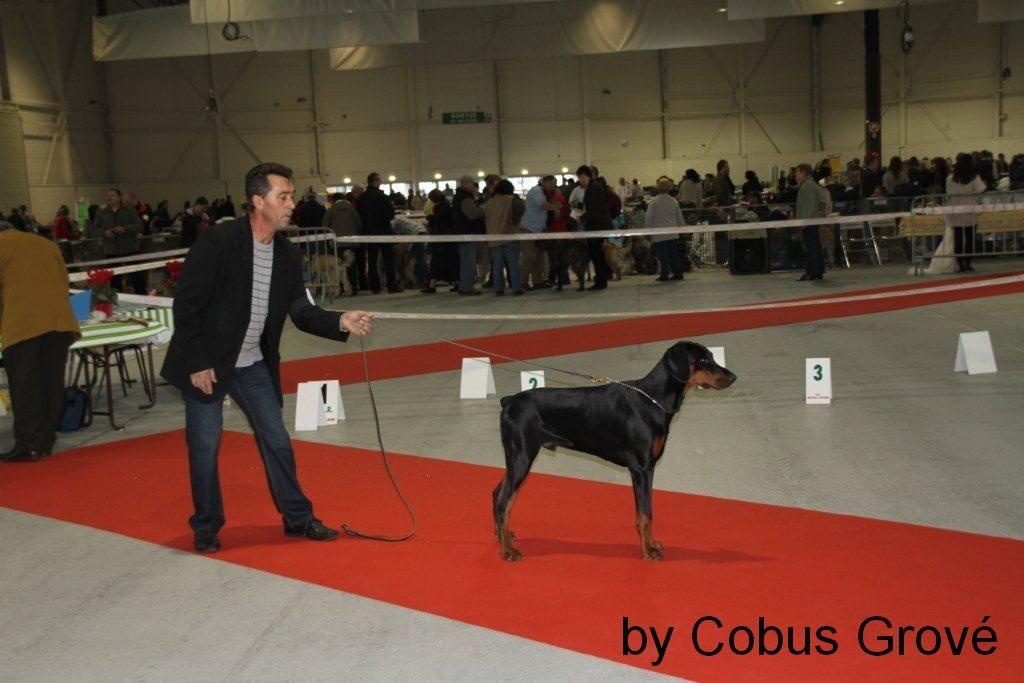 2010-11-07 CACIB Metz / France Puppy Class