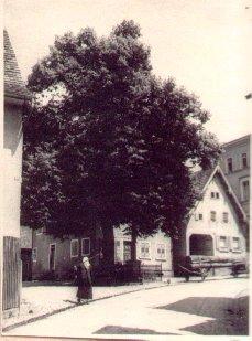 """Blick vom Gasthaus """"Löwen"""" auf Bäckerei Kastner (Kastnerbeck) mit der großen Dorflinde"""