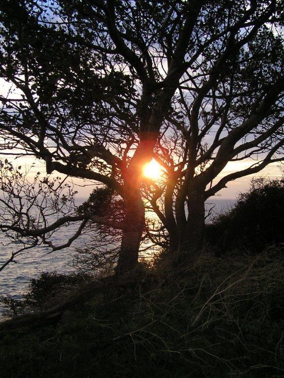 Sonne im Baum