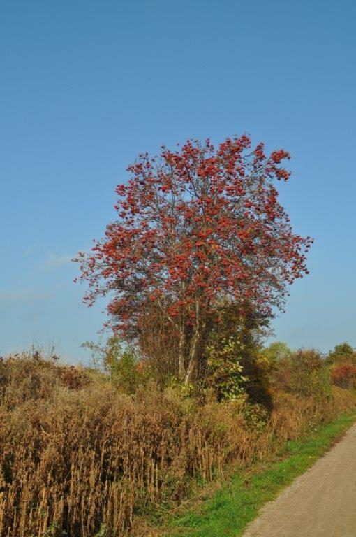 Baumfrüchte im Herbst