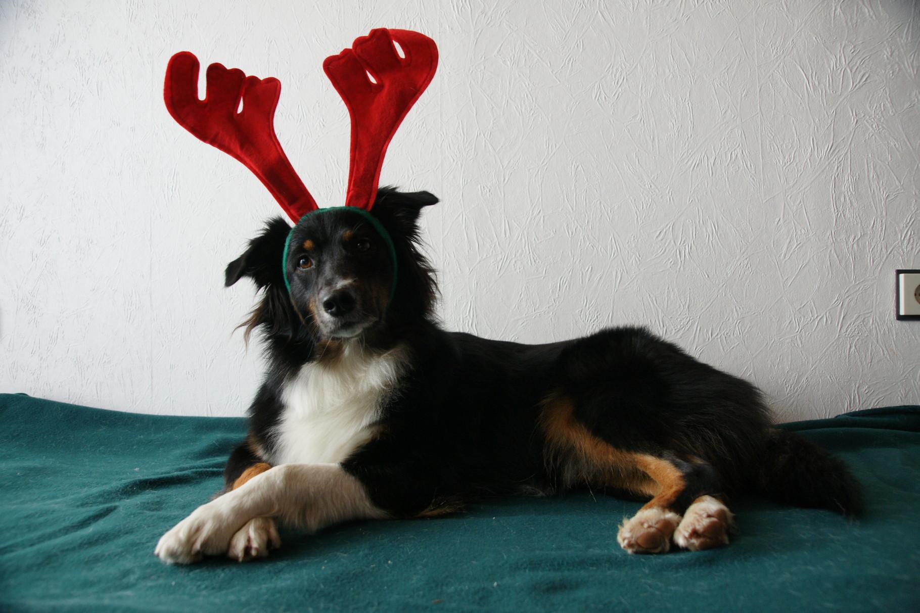 Für jeden Spaß zu haben unser Weihnachtselch