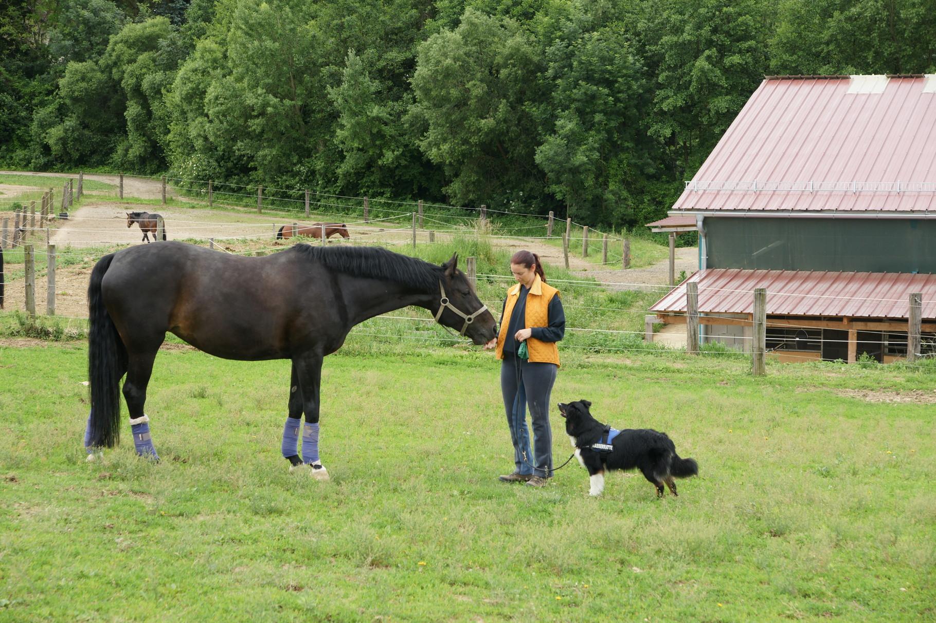 bei unseren Pferden