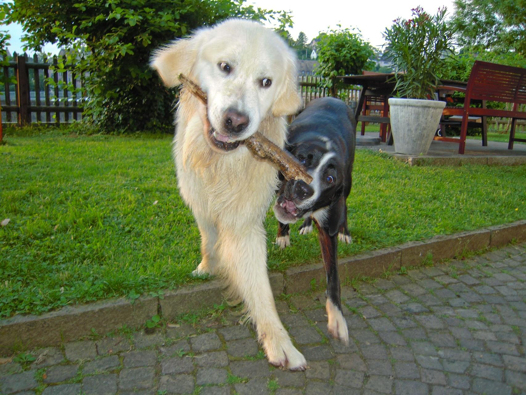 Tino und Gioia