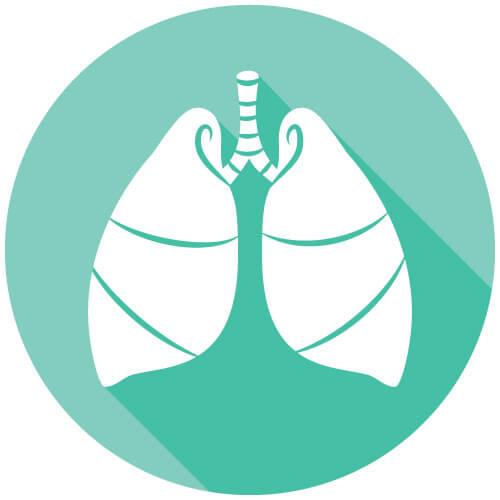Bild: Organ - Lungen