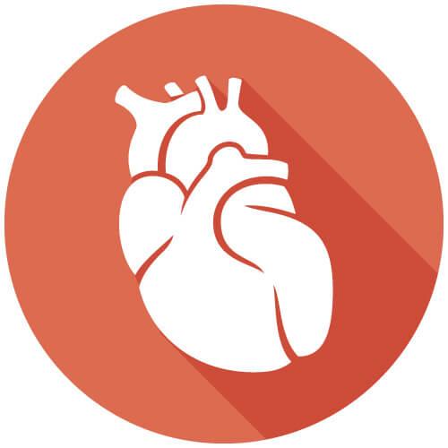 Bild: Organ - Herz