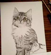 Katze zeichnen 4