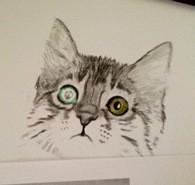 Katze zeichnen 2