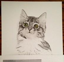 Katze zeichnen 3