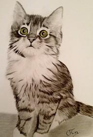 Katze zeichnen 6