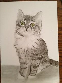 Katze zeichnen 5