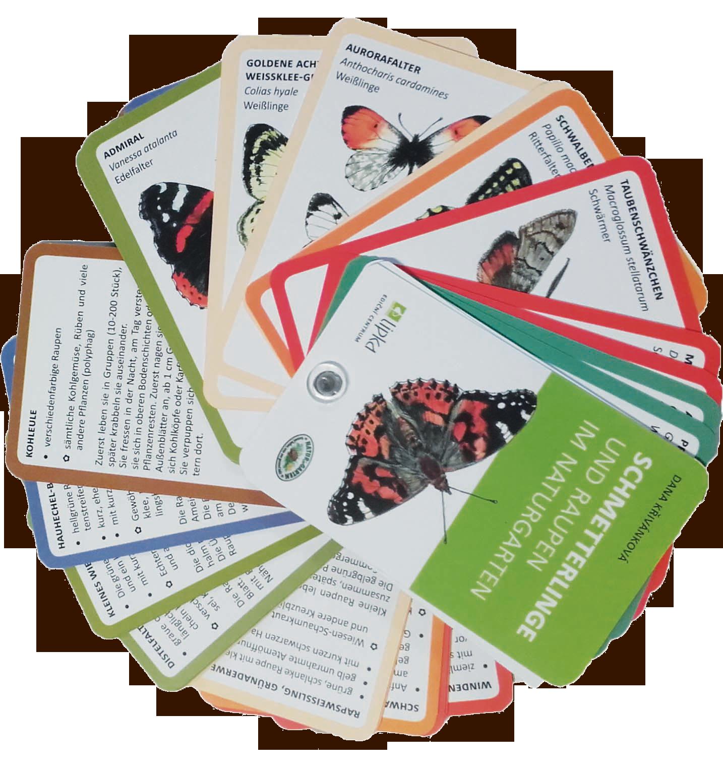 Schmetterlings-Bestimmungsfächer