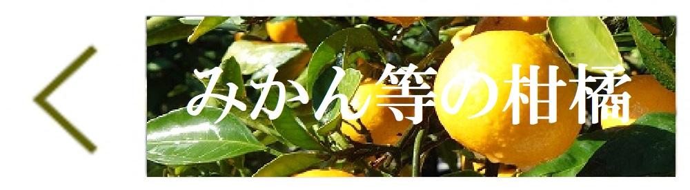 広島県江田島市産 産直野菜