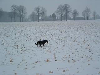 Freiheit absolut im Schnee