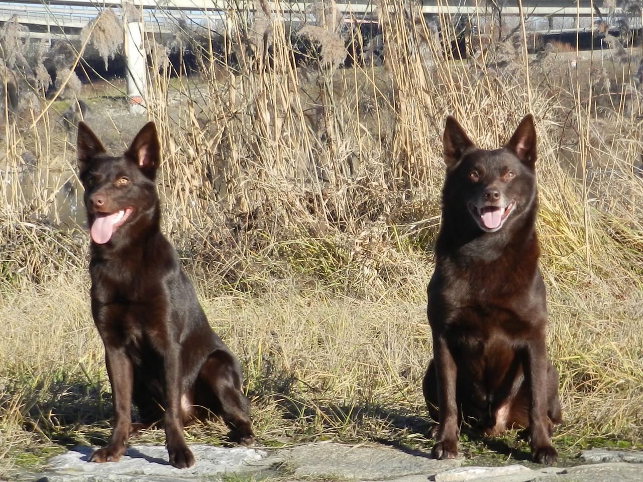 Smacks (Copper) & Bas