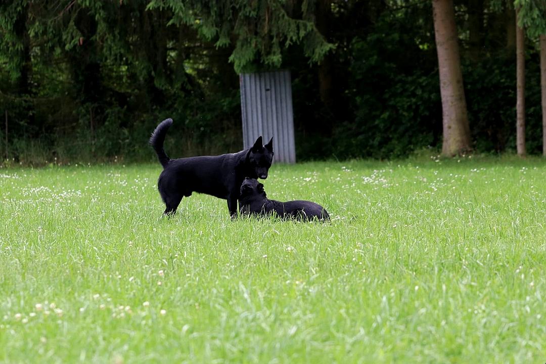 Ace & Talia