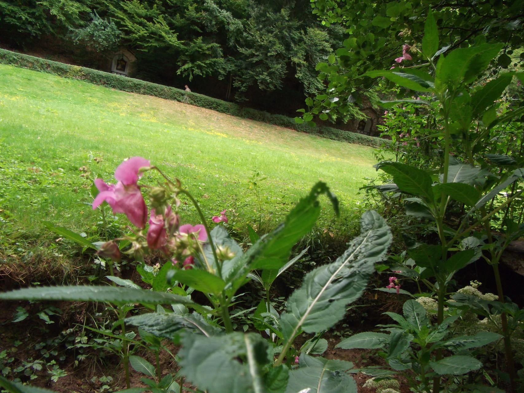 """""""Die Natur ist das einzige Buch, das auf allen Blättern großen Gehalt bietet"""" (Goethe)"""