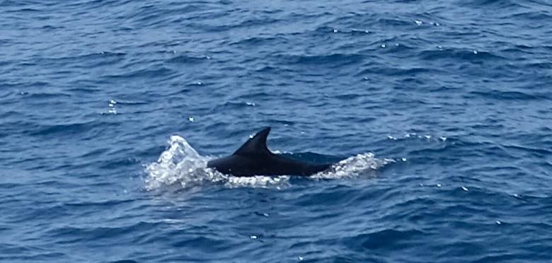 die Delfine und machen uns....