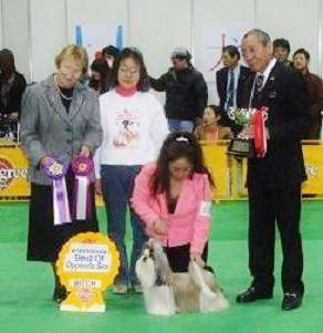 07単犬種特別合同本部展受賞  ラヴリンちゃん                      ジャッジ:アメリカ  ハンドラー:ピエロさん