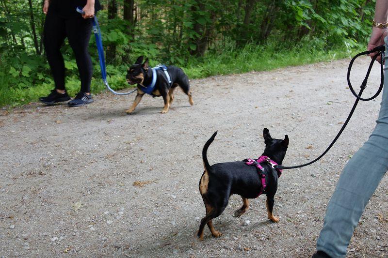 NEU! Workshop Hundebegegnung